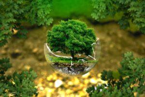 איך לשמור על הסביבה וגם לחסוך כסף